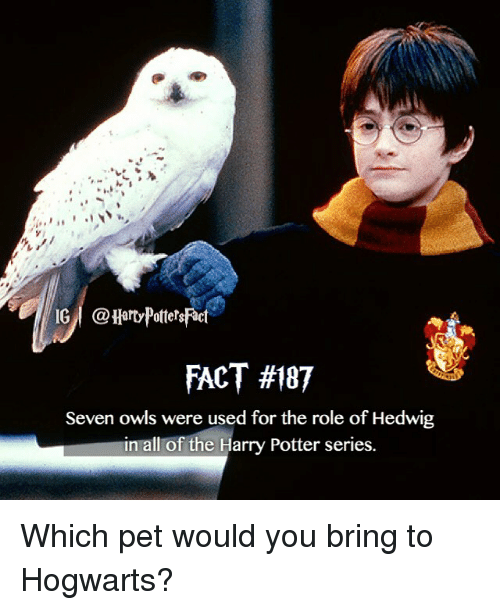 Ig I Fact 187 Seven Owls Were Used For The Role Of Hedwig In All