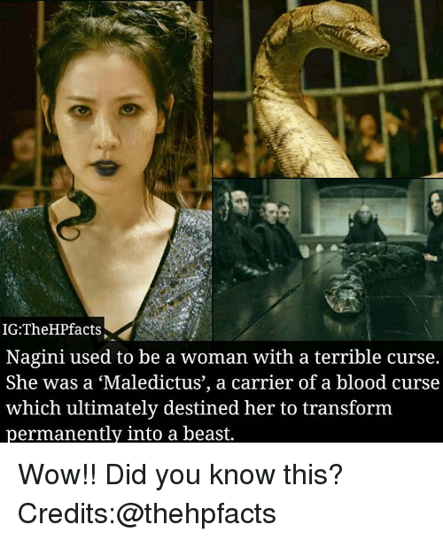 Memes, Wow, and 🤖: IG:TheHPfacts  Nagini used to be a woman with a terrible curse.  She was a 'Maledictus', a carrier of a blood curse  which ultimately destined her to transform  permanently into a beast. Wow!! Did you know this?Credits:@thehpfacts