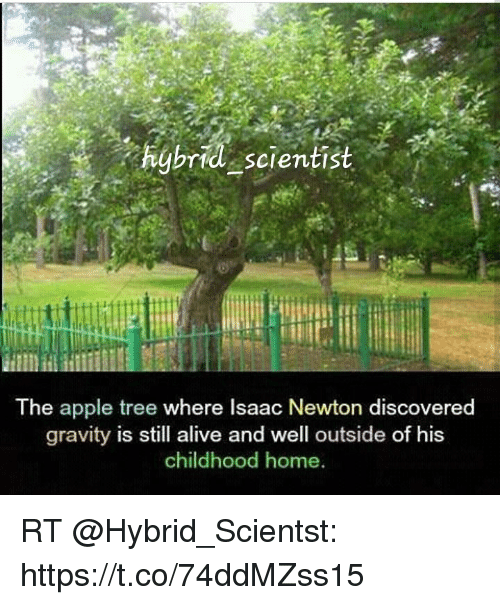 Igbrid Scientist The Apple Tree Where Isaac Newton Discovered