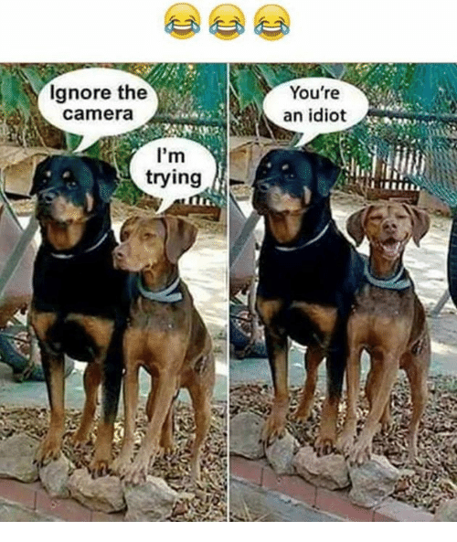 Memes, Camera, and Idiot: Ignore the  Camera  I'm  trying  You're  an idiot