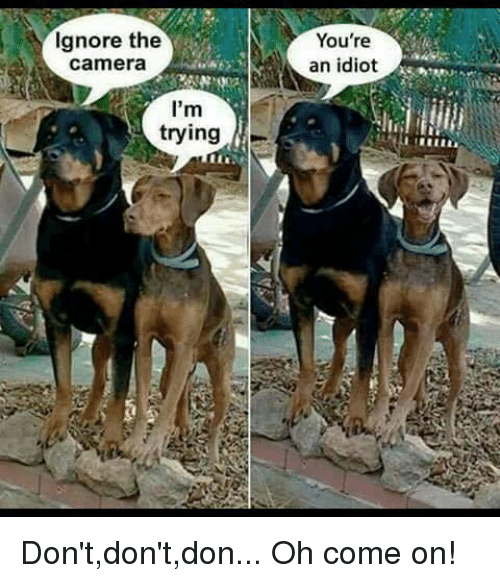 Imgur Ignore Dog When You Come Home