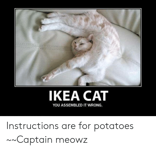 Ikea Cat You Assembled It Wrong Instructions Are For Potatoes