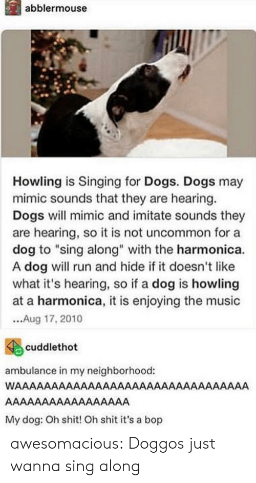 """Dogs, Music, and Run: İl abblermouse  Howling is Singing for Dogs. Dogs may  mimic sounds that they are hearing.  Dogs will mimic and imitate sounds they  are hearing, so it is not uncommon for a  dog to """"sing along"""" with the harmonica.  A dog will run and hide if it doesn't like  what it's hearing, so if a dog is howling  at a harmonica, it is enjoying the music  ...Aug 17,2010  4cuddlethot  ambulance in my neighborhood:  My dog: Oh shit! Oh shit it's a bop awesomacious:  Doggos just wanna sing along"""