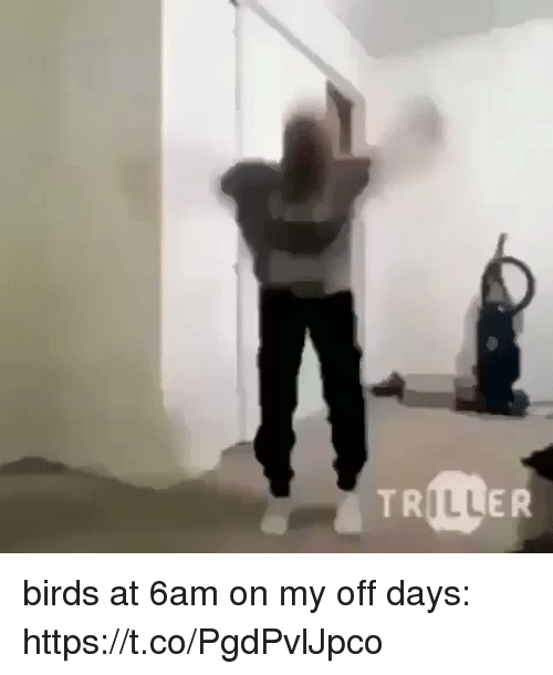 Birds, Girl Memes, and Ill: ILL birds at 6am on my off days: https://t.co/PgdPvlJpco