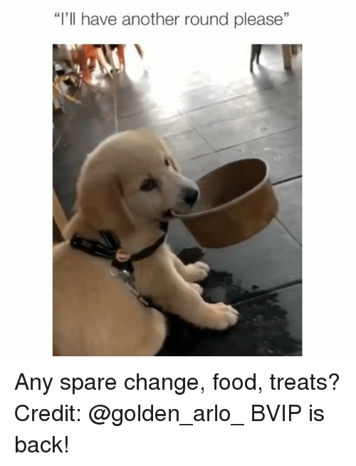 """Food, Memes, and Change: """"I'll have another round please"""" Any spare change, food, treats? Credit: @golden_arlo_ BVIP is back!"""