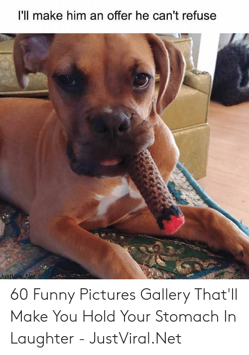 Funny, Pictures, and Laughter: I'll make him an offer he can't refuse  JustViral Net 60 Funny Pictures Gallery That'll Make You Hold Your Stomach In Laughter - JustViral.Net