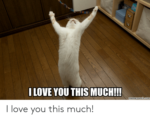 Love, I Love You, and Com: ILOVE YOU THIS MUCH!!!  memecrunch.com I love you this much!