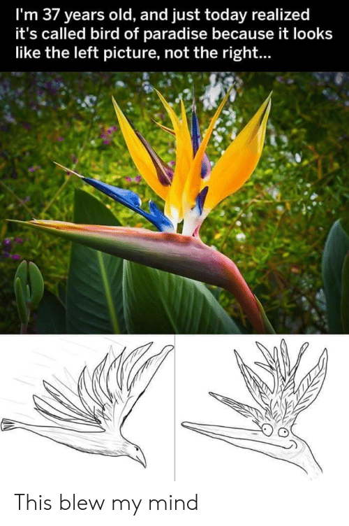 Paradise, Today, and Old: I'm 37 years old, and just today realized  it's called bird of paradise because it looks  like the left picture, not the right... This blew my mind