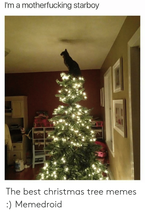 I'm a Motherfucking Starboy the Best Christmas Tree Memes