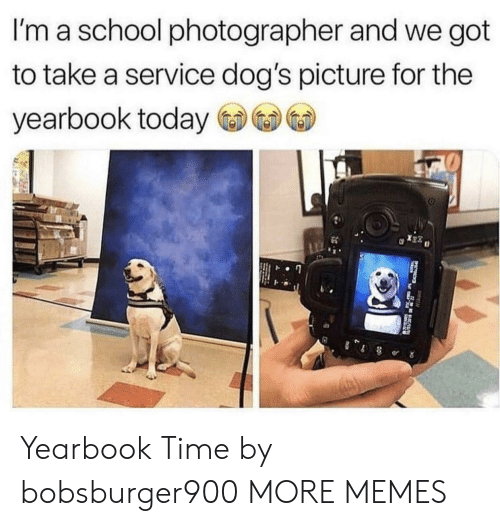 Dank, Dogs, and Memes: I'm a school photographer and we got  to take a service dog's picture for the  yearbook today  0 Yearbook Time by bobsburger900 MORE MEMES