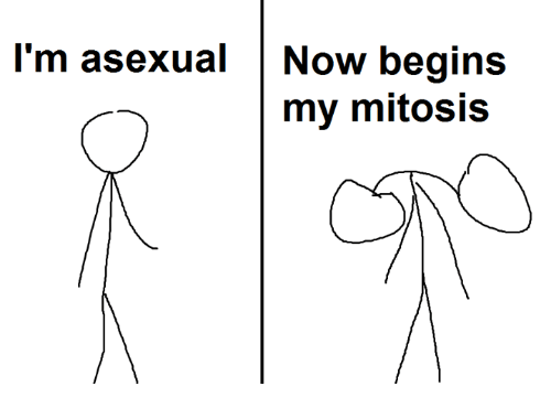 Cartoons/Comics/Memes - Page 2 Im-asexual-now-begins-my-mitosis-2624023