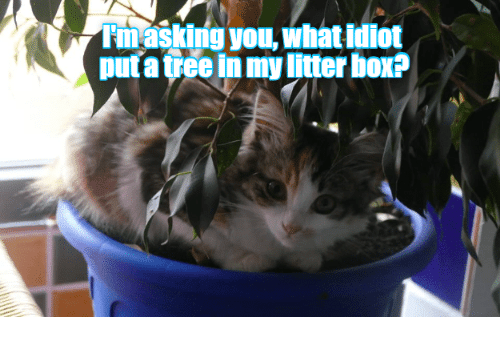 Tree, Idiot, and Asking: Im asking you, what idiot  put a tree in my litter hox