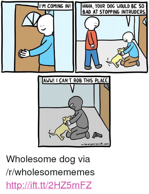 """Aww, Bad, and Http: I'M COMING IN!     HAHA, YOUR DOG WOULD BE SO    BAD AT STOPPING INTRUDERS  AWW! I CAN T ROB THIS PLACE  miksorganisciak.com <p>Wholesome dog via /r/wholesomememes <a href=""""http://ift.tt/2HZ5mFZ"""">http://ift.tt/2HZ5mFZ</a></p>"""
