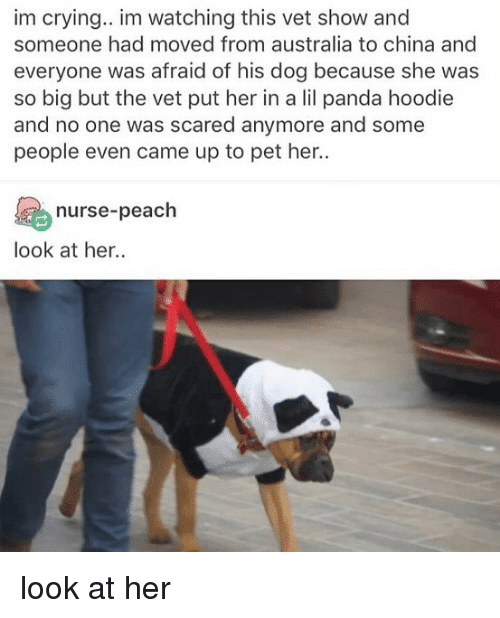 Crying, Memes, and China: im crying.. im watching this vet show and  someone had moved from australia to china and  everyone was afraid of his dog because she was  so big but the vet put her in a lil panda hoodie  and no one was scared anymore and some  people even came up to pet her..  nurse-peach  look at her look at her