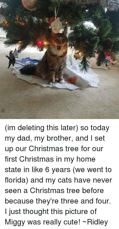 memes christmas tree and florida im deleting this later so today