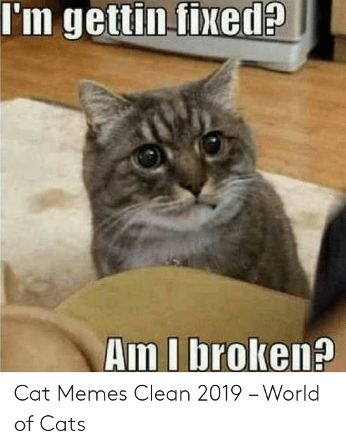 Im Gettin Fixed Am I Broken Cat Memes Clean 2019 World