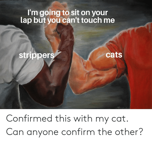 Cats, Strippers, and Dank Memes: I'm going to sit on your  lap but you can't touch me  strippers  cats Confirmed this with my cat. Can anyone confirm the other?