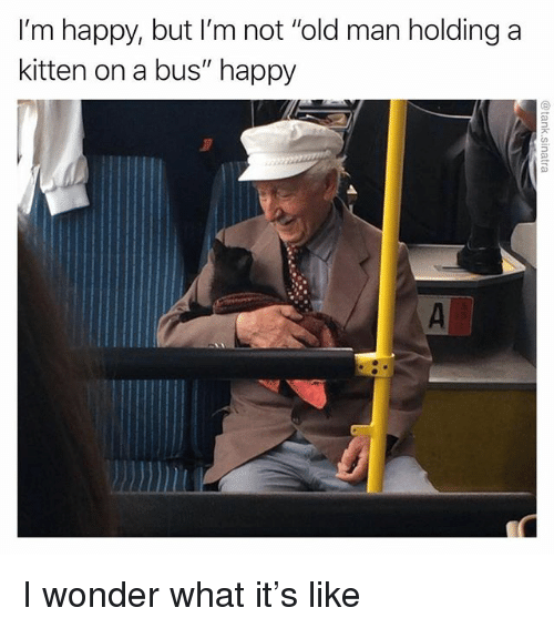"Funny, Old Man, and Happy: I'm happy, but I'm not ""old man holding a  kitten on a bus"" happy I wonder what it's like"