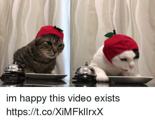 Happy, Video, and Girl Memes: im happy this video exists https://t.co/XiMFklIrxX