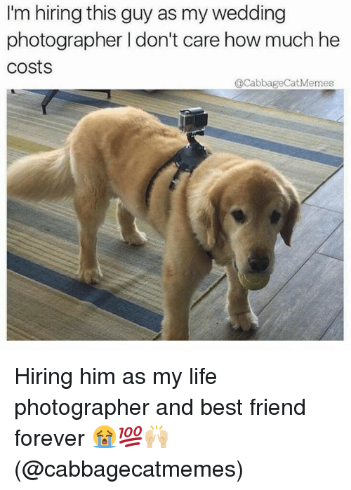 Best Friend, Life, and Memes: Im hiring this guy as my wedding  I'm hiring this guy as my wedding  photographer I don't care how much he  costs  QCabbageCatMemes Hiring him as my life photographer and best friend forever 😭💯🙌🏼(@cabbagecatmemes)