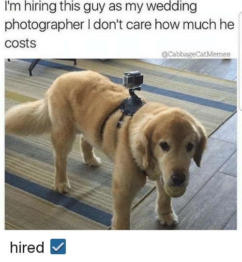Relatable, Wedding, and How: I'm  hiring  this  guy as my  wedding  photographer I don't care how much he  costs  @CabbageCatMemes hired ☑️