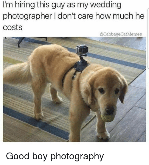 Dank, Good, and Photography: I'm hiring this guy as my wedding  photographer I don't care how much he  costs  CabbageCatMemes Good boy photography