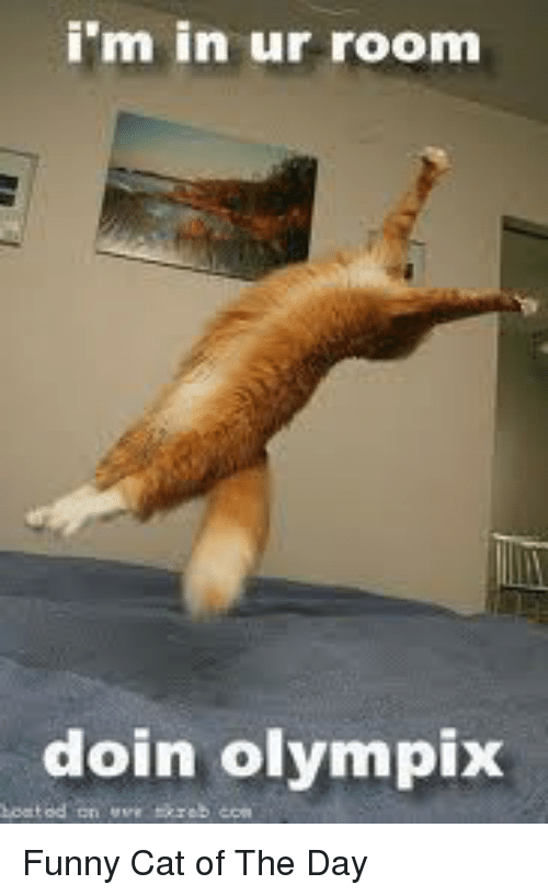 Cats Funny And Cat Im In Ur Room Doin Olympix Funny  C B Funny Cat Of The Day
