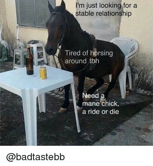 Tbh, Dank Memes, and Looking: I'm just looking fora  stable relationship  Tired of horsing  around tbh  Need a  mane chick,  a ride or die @badtastebb