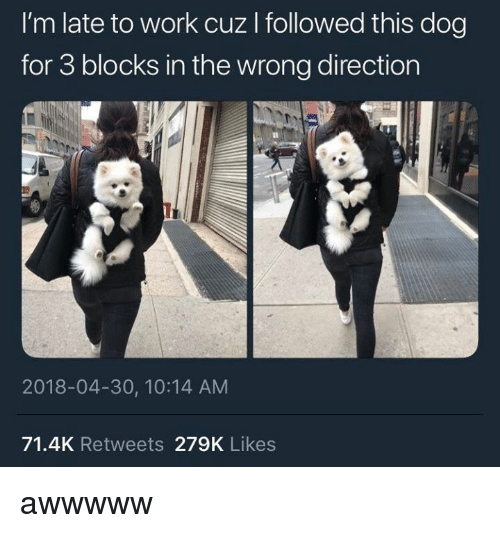 Work, Dog, and For: I'm late to work cuz I followed this dog  for 3 blocks in the wrong direction  Il  2018-04-30, 10:14 AM  71.4K Retweets 279K Likes awwwww