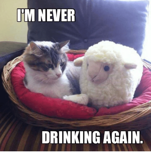 Memes, 🤖, and Never Drinking Again: IM NEVER  DRINKING AGAIN