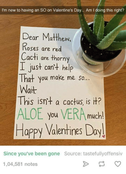 Dank, Valentine's Day, and Happy: I'm new to having an so on Valentine's Day... Am l doing this right?  Dear Matthew,  Roses are red  Cacti are thorny  I just can't help  That you make me so...  Wait  This isn't a cactus, is it?  ALOE you VERA much!  Happy Valentines Day!  Since you've been gone Source: tastefully offensiv  1,04,581 notes