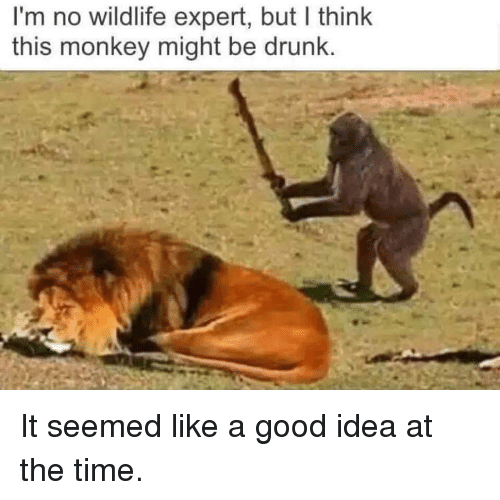 Image result for wildlife-funny