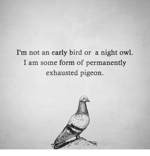 Memes, 🤖, and Owl: I'm not an early bird or a night owl.  I am some form of permanently  exhausted pigeon.