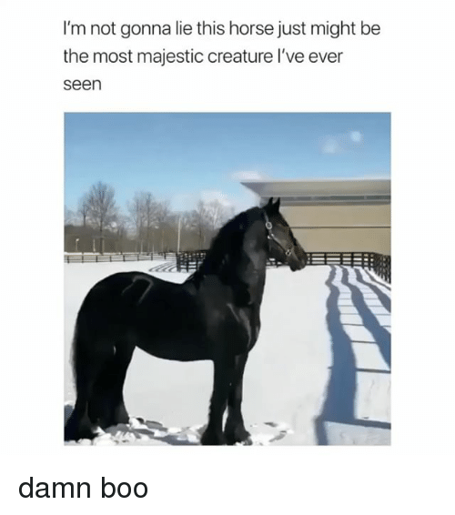 Boo, Horse, and Girl Memes: I'm not gonna lie this horse just might be  the most majestic creature l've ever  seen damn boo