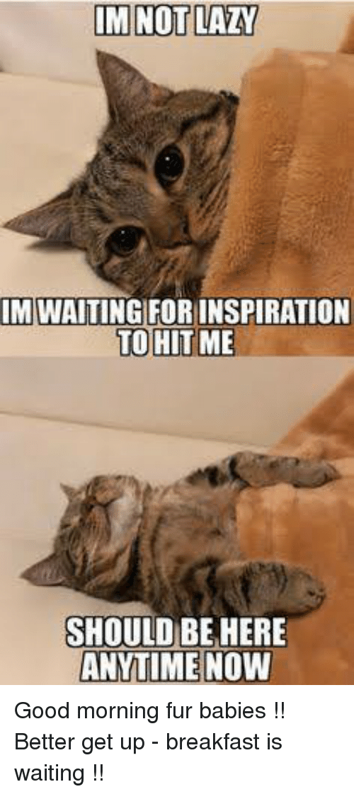 Lazy, Memes, and Good Morning: IM NOT LAZY  IM WAITING FORINSPIRATION  TO HIT ME  SHOULD BE HERE  ANYTIME|NOW Good morning fur babies !! Better get up - breakfast is waiting !!