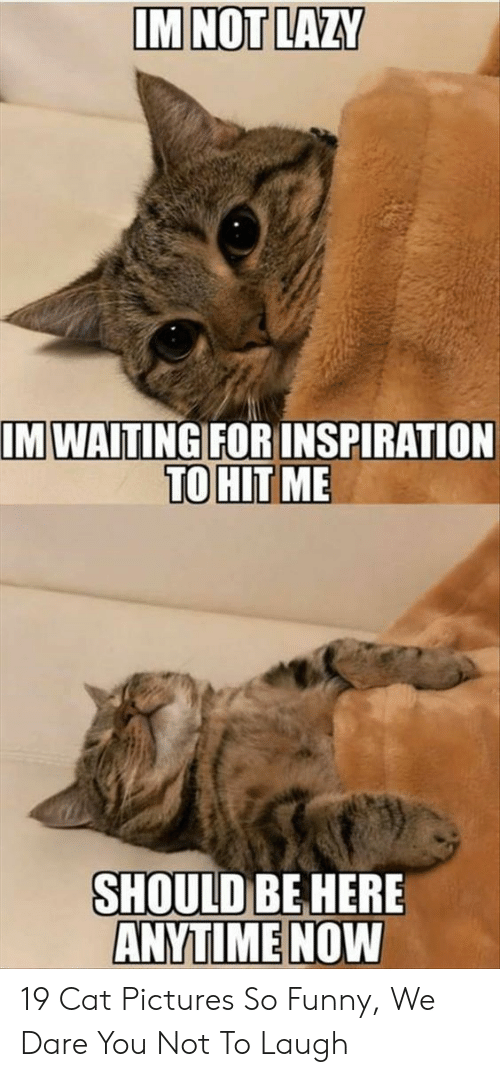 Funny, Lazy, and Pictures: IM NOT LAZY  IM WAITING  FORINSPIRATION  TO HIT ME  SHOULD BE HERE  ANYTİMENOW 19 Cat Pictures So Funny, We Dare You Not To Laugh