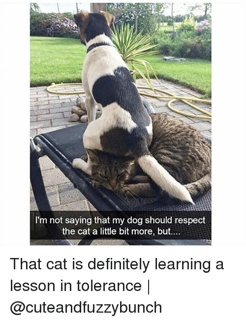 Definitely, Memes, and Respect: I'm not saying that my dog should respect  the cat a little bit more, but.... That cat is definitely learning a lesson in tolerance | @cuteandfuzzybunch
