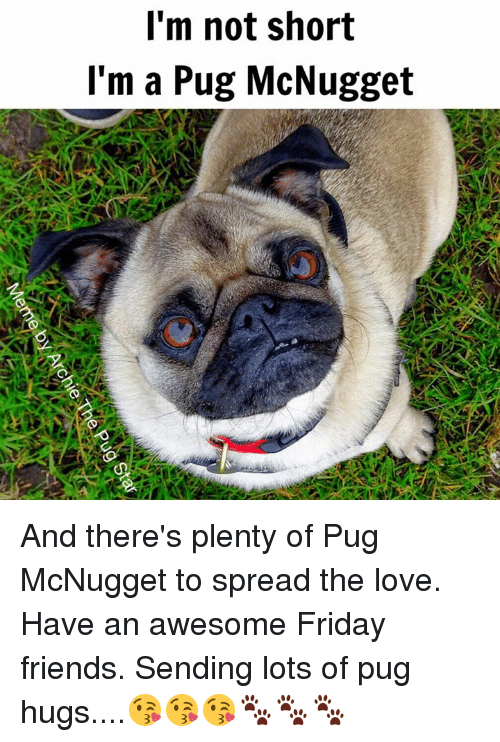 Im Not Short Im A Pug Mcnugget And Theres Plenty Of Pug Mcnugget