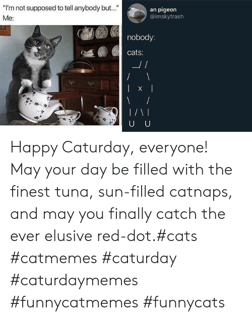 """Cats, Caturday, and Happy: """"I'm not supposed to tell anybody but..""""  an pigeon  @imskytrash  Me:  nobody:  cats:  L/  U U Happy Caturday, everyone! May your day be filled with the finest tuna, sun-filled catnaps, and may you finally catch the ever elusive red-dot.#cats #catmemes #caturday #caturdaymemes #funnycatmemes #funnycats"""