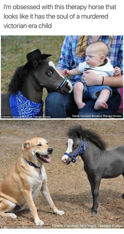 Horses, Horse, and Victorian Era: I'm obsessed with this therapy horse that  looks like it has the soul of a murdered  victorian era child   Gentle Carouse/ Mihiature Therapy Horses  Gentle Carousel Miniature Therapy Horses   Gente Cerouse Mitilaure herapy Horses Gentle Carousel Mimature Therapy Ftorses