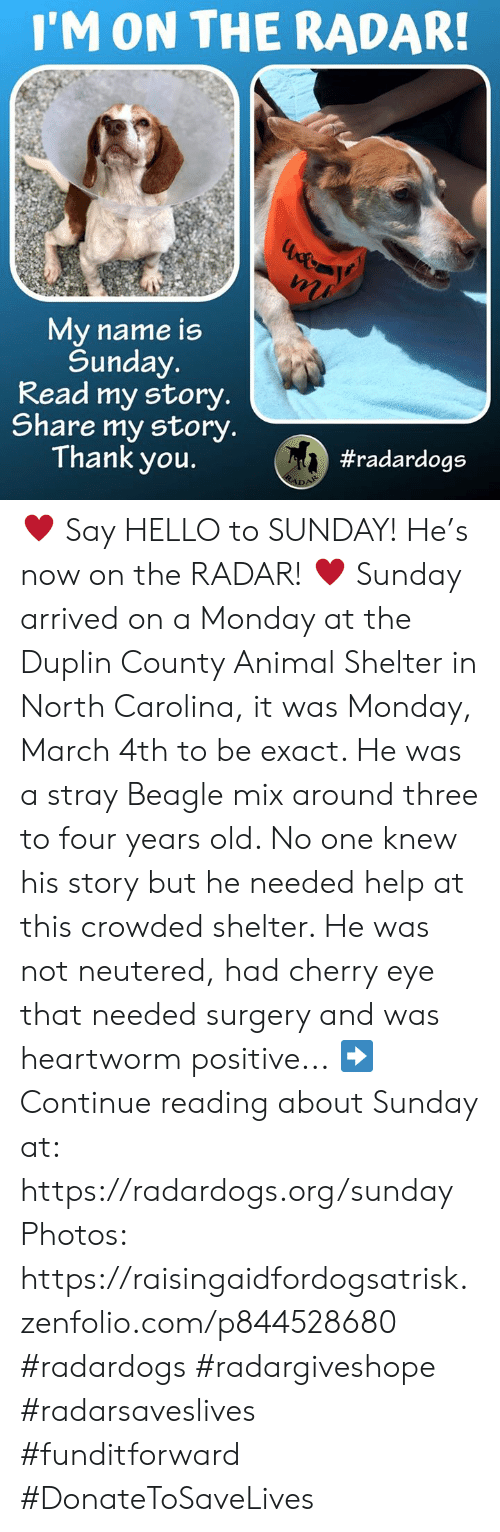 Hello, Memes, and Thank You: I'M ON THE RADAR  My name is  Sunday  Read my story.  Share my story.  Thank you.  ♥️ Say HELLO to SUNDAY! He's now on the RADAR! ♥️  Sunday arrived on a Monday at the Duplin County Animal Shelter in North Carolina, it was Monday, March 4th to be exact. He was a stray Beagle mix around three to four years old. No one knew his story but he needed help at this crowded shelter. He was not neutered, had cherry eye that needed surgery and was heartworm positive...  ➡️ Continue reading about Sunday at: https://radardogs.org/sunday  Photos: https://raisingaidfordogsatrisk.zenfolio.com/p844528680  #radardogs #radargiveshope #radarsaveslives #funditforward #DonateToSaveLives
