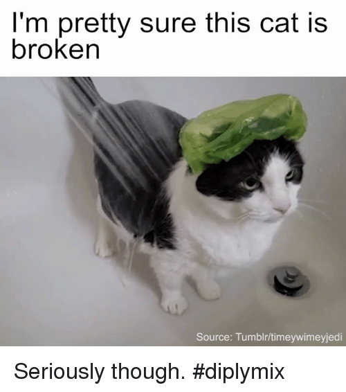 im pretty sure this cat is broken source tumblr timeywimeyjedi seriously 13526305 i'm pretty sure this cat is broken source tumblrtimeywimeyjedi