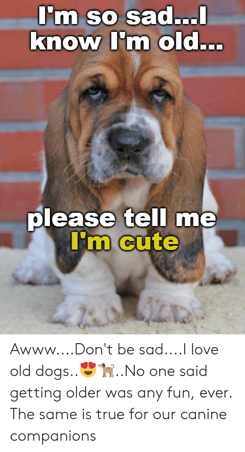 Cute, Dogs, and Love: Im So sad...  knowm old...  please tell me  m Cute Awww....Don't be sad....I love old dogs..😍🐕..No one said getting older was any fun, ever. The same is true for our canine companions