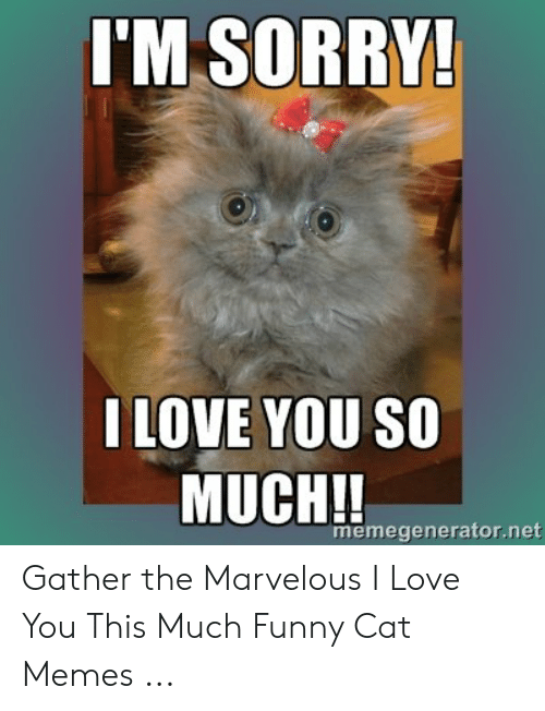 Funny, Love, and Memes: I'M SORRY!  I LOVE YOU SO  MUCH!!  memegenerator.net Gather the Marvelous I Love You This Much Funny Cat Memes ...