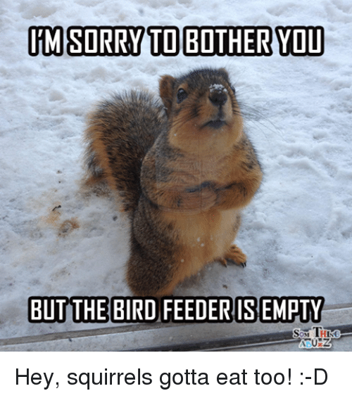 im sorry to bother you but the bird feeder isempty 8666475 im sorry to bother you but the bird feeder isempty hey squirrels