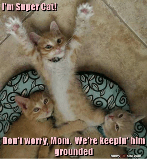 Cats, Memes, and Mom: Im Super Cat!  Don't worry, Mom. We're keepin'him  grounded  funny  CAT  site.com