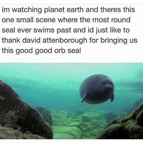 Earth, Good, and Seal: im watching planet earth and theres this  one small scene where the most round  seal ever swims past and id just like to  thank david attenborough for bringing us  this good good orb seal