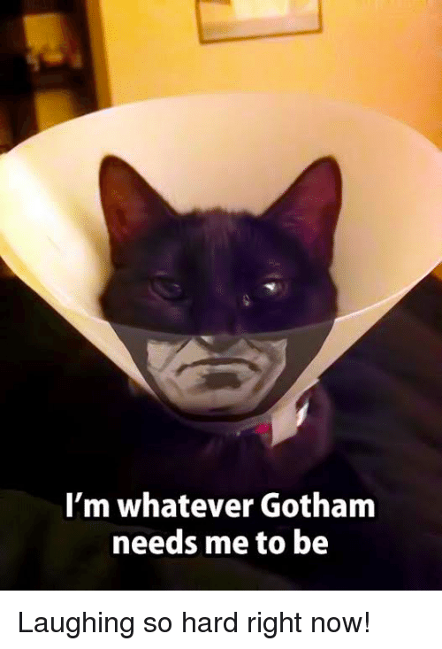Im Whatever Gotham Needs Me To Be Laughing So Hard Right Now
