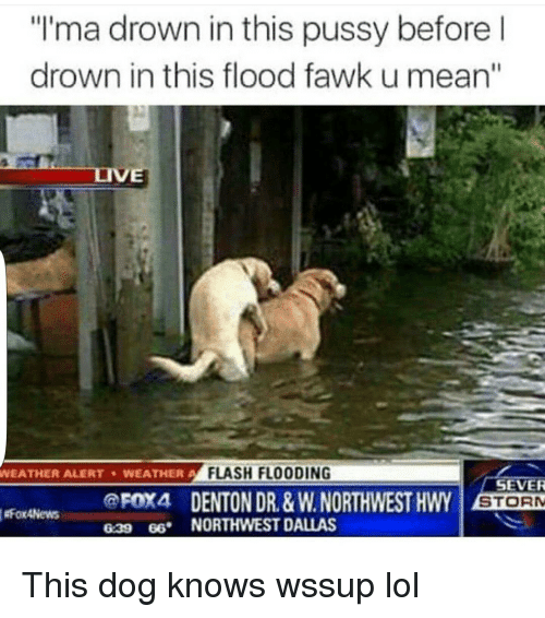 """Dogs, Funny, and Lol: """"I'ma drown in this pussy before l  drown in this flood fawk u mean""""  WEATHER ALERT WEATHER A  FLASH FLOODING  SEVER  FOX4 DENTON DR. &w.NORTHWEST HWY STORM  FoxANews  639 66. NORTHWEST DALLAS This dog knows wssup lol"""