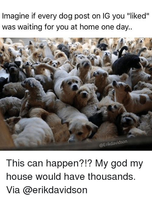 "God, Memes, and My House: Imagine if every dog post on IG you ""liked""  was waiting for you at home one day.  @Erikdavidson This can happen?!? My god my house would have thousands. Via @erikdavidson"